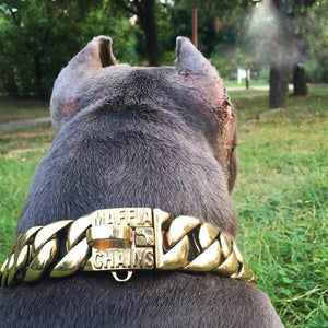 Iced out Dog Chain Label Signing Edition (HOT ITEM!)
