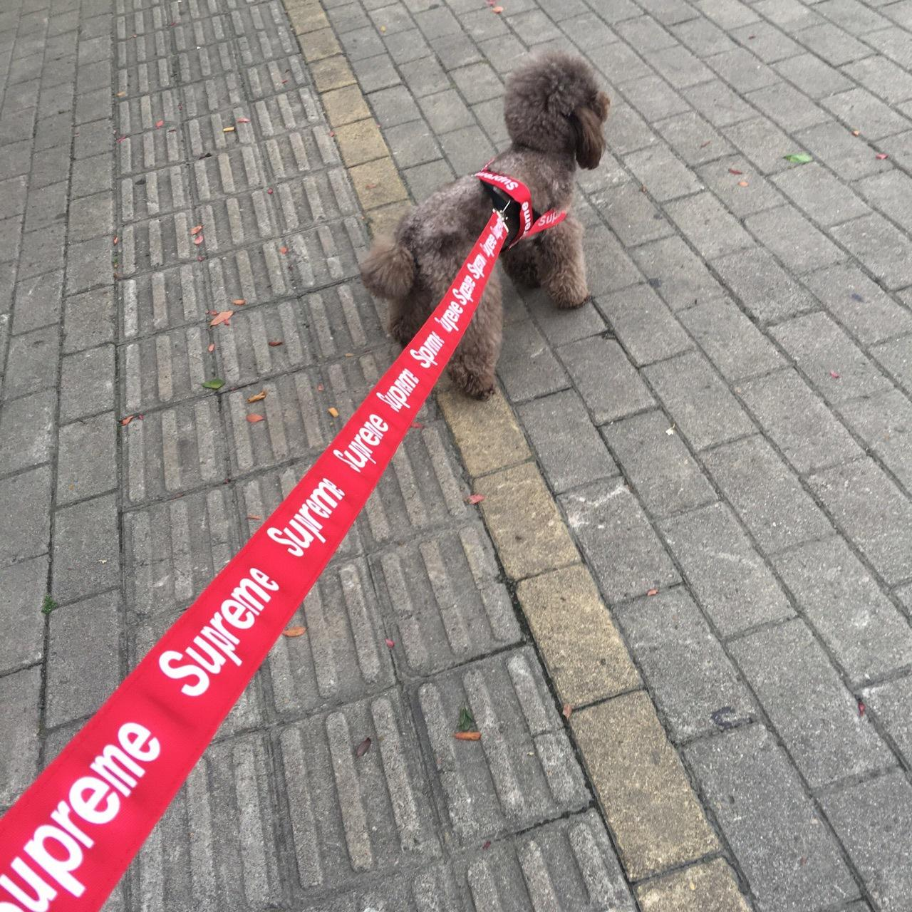 Supreme Flashers Safety Collar & Leashes – Mr Dogy