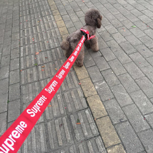 Pupreme Flashers Safety Collar & Leashes - Mr Dogy - Fashion Shop