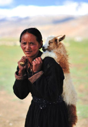 The Telegraph - Great Escape: On the trail of India's cashmere goat herders