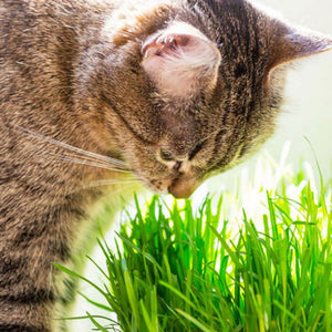Catnip Natural Treats Control And Removal Hairball