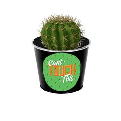 Can't Touch This Cactus