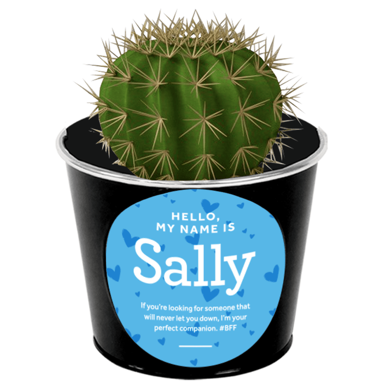 Sally the Cactus