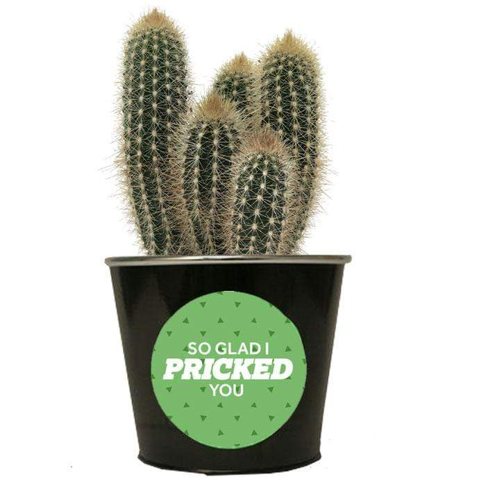 'So glad I pricked you' Cactus
