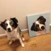 Custom Pet Stretched Canvas Wall Art