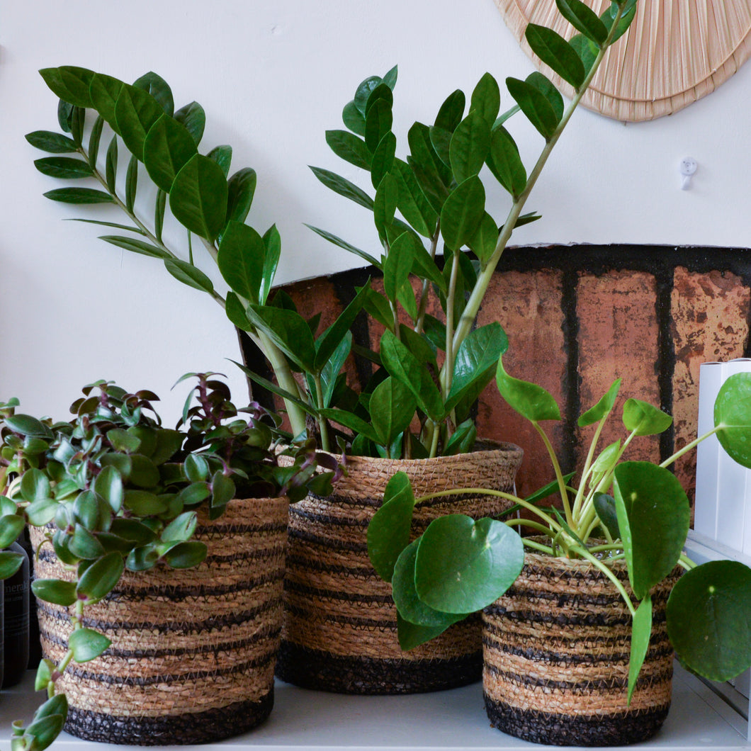 baskets-for-plants