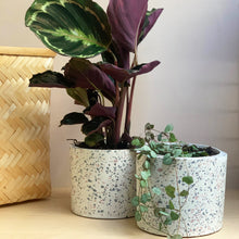 Load image into Gallery viewer, sass and belle Mon Pote white terrazzo cement planter pot