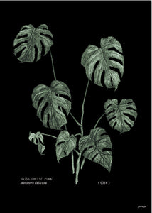 Your Type Botanical Mostera Print (Choice of two sizes)