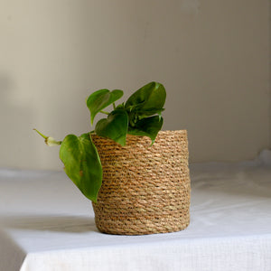jute-baskets-fr-plants