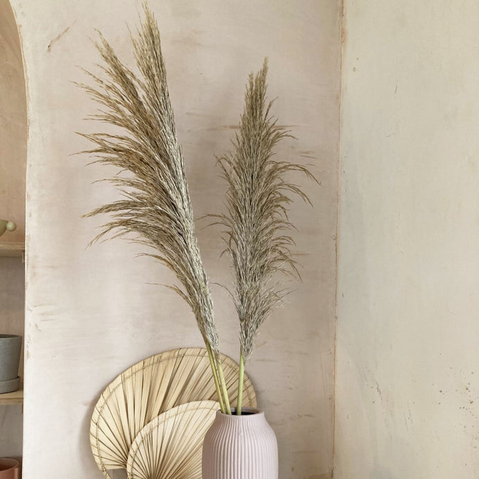 pampas grass neutral dried flowers Mon Pote single stem