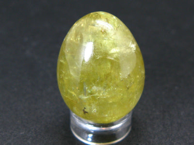 Large Gold Apatite Egg from Mexico - 20.4 Grams - 1.1""