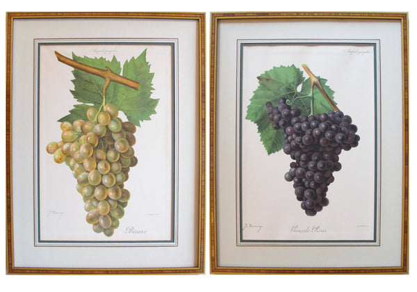 1901-1910 Pair of Antique Botanical Plates, Grapes (framed)