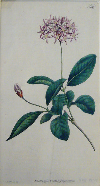 1791 (Published Original Antique Flower Print)