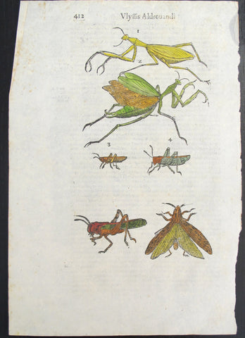 17th Century Italian Vintage Insects - Vlyffis Aldrouandi (p.411-412) book page, Colored Steel Engraving