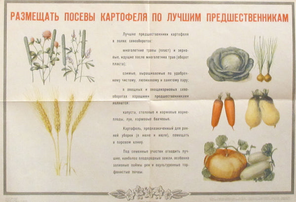 1950s Original Russian Poster, Planting Potatos