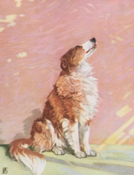 1930's American Dog Portrait, Collie