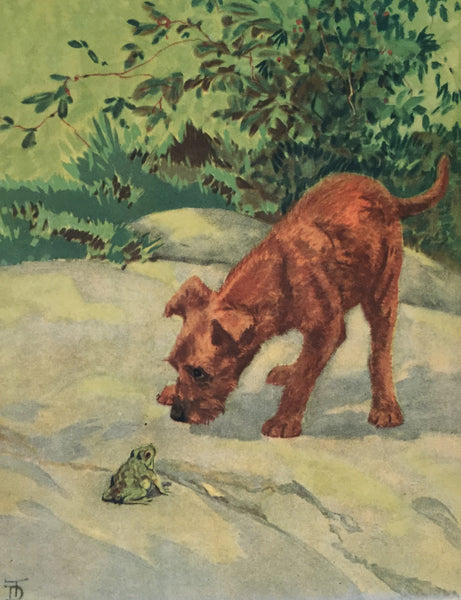1930's American Dog Portrait, Irish Terrier - Thorne