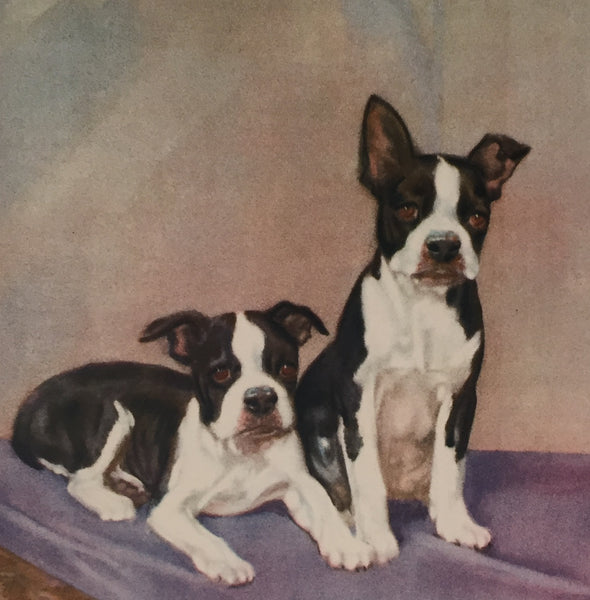 1930's American Dog Portrait, Bulldog Puppies