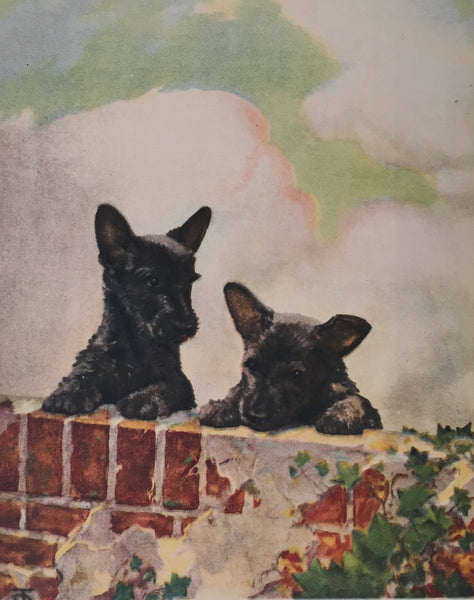 1930's American Dog Portrait, Scottish Terrier