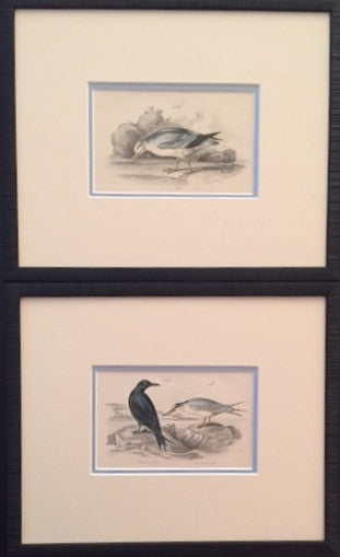 1850 Vintage Italian Bird Prints, S/2 - Anonymous