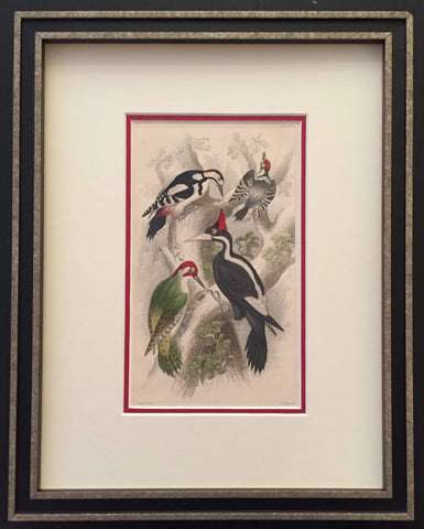 1850 Vintage Italian Bird Print, Woodpecker - Anonymous