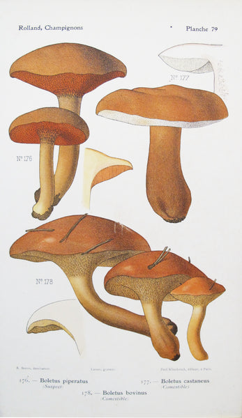 1910 French Mushroom Botanical Plate, Boletus piperatus and Boletus castaneus