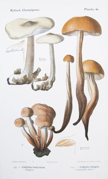 1910 French Mushroom Botanical Plate, Collybia
