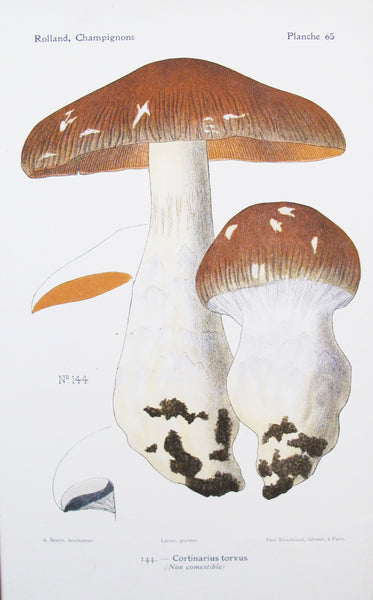 1910 French Mushroom Botanical Plate, Cortinarius Torvus