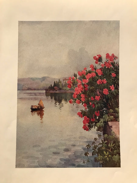 1905 Original Italian Print - Italian Travel Colour Plate - Oleanders
