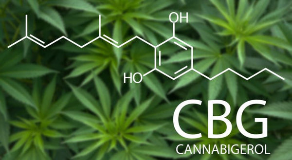 What Is CBG (Cannabigerol) & What Does This Cannabinoid Do?