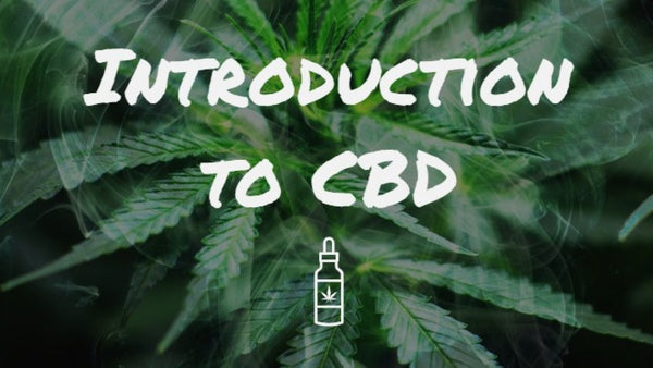Incorporating CBD and CBG oil into your daily routine