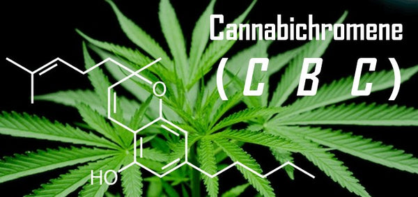 What Is CBC (Cannabichromene) & What Are the Benefits of This Cannabinoid?
