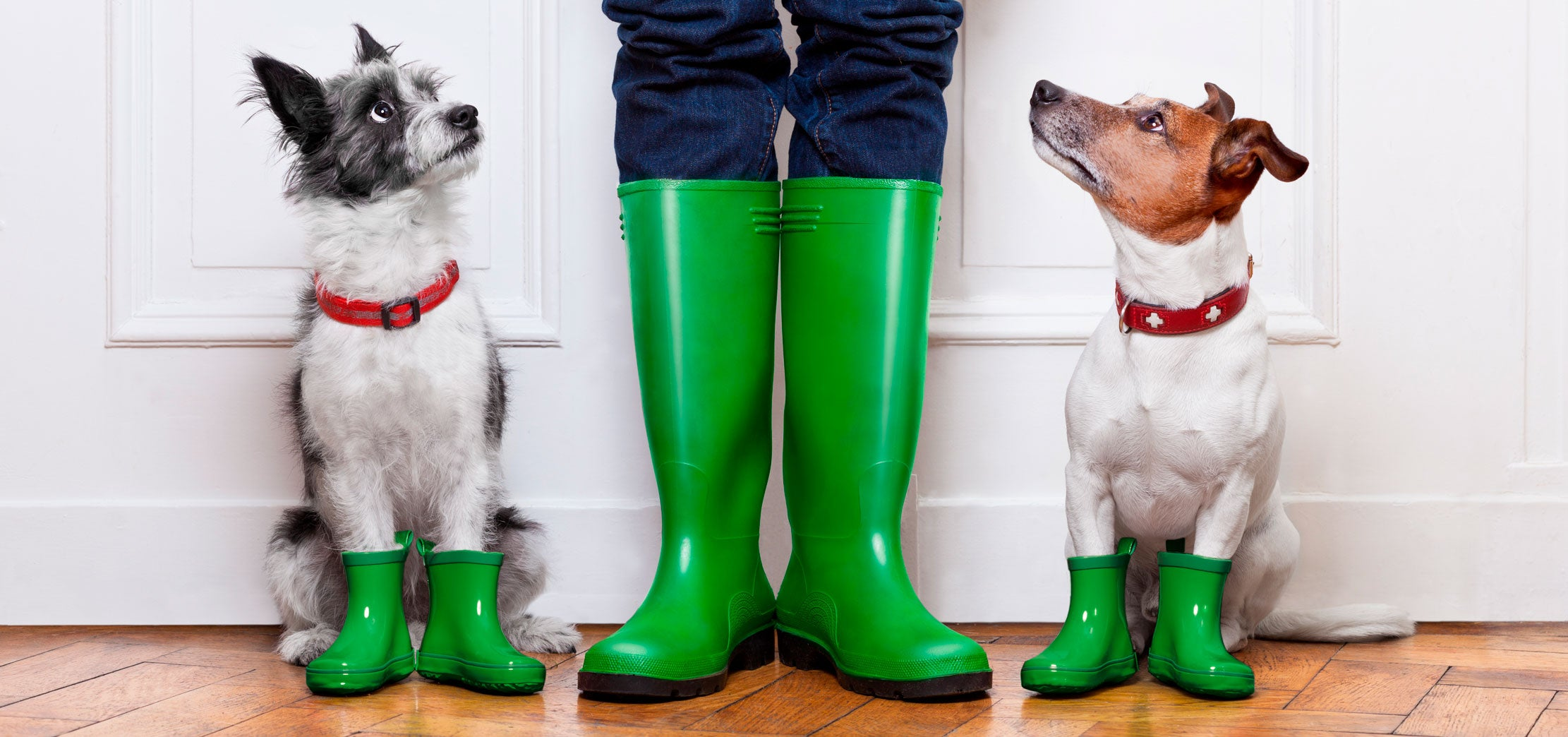 urban dogs with green rubber boots