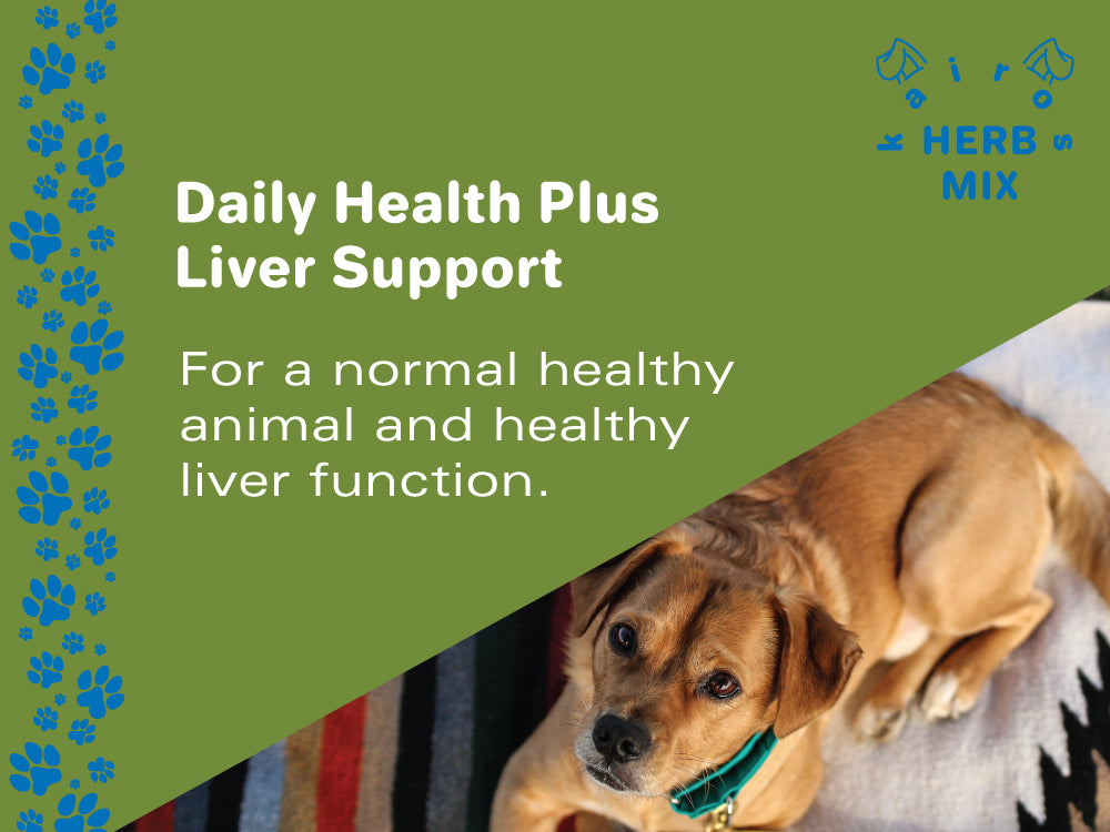 Daily Health plus Liver Support