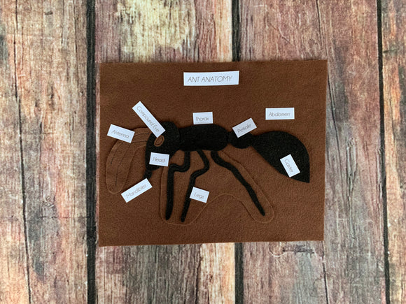 Ant Anatomy Set
