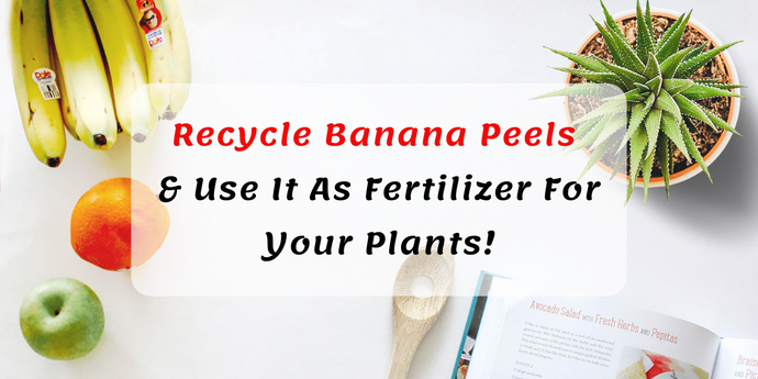 Recycle Banana Peels  & Use It As Fertilizer For Your Plants!