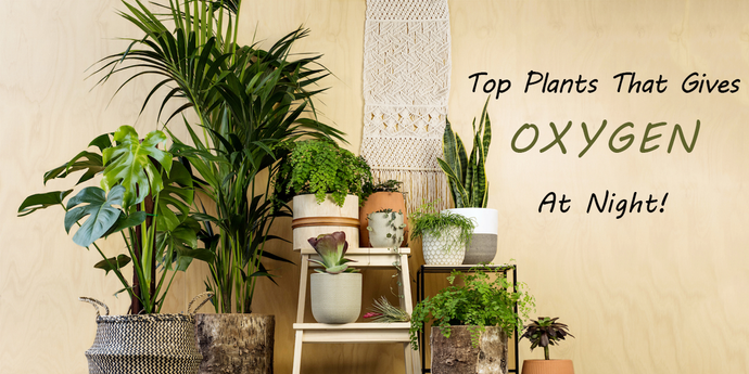 9 Popular Plants That Gives Oxygen At Night As Well
