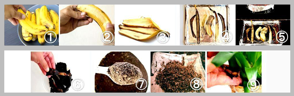 banana-peel-fermentation