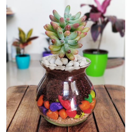 Jelly Bean Succulent Glass Decor