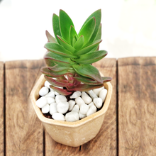 Load image into Gallery viewer, Red Pagoda Succulent in Ceramic Pot