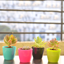 Load image into Gallery viewer, PaudhaHouse Set of 4 Succulents With Planters