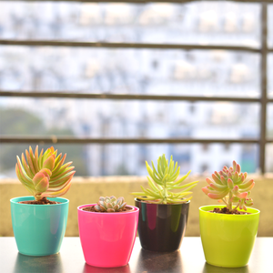 PaudhaHouse Set of 4 Succulents With Planters