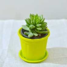 Load image into Gallery viewer, PaudhaHouse Molded Wax  Succulent With Yellow Grower Pot