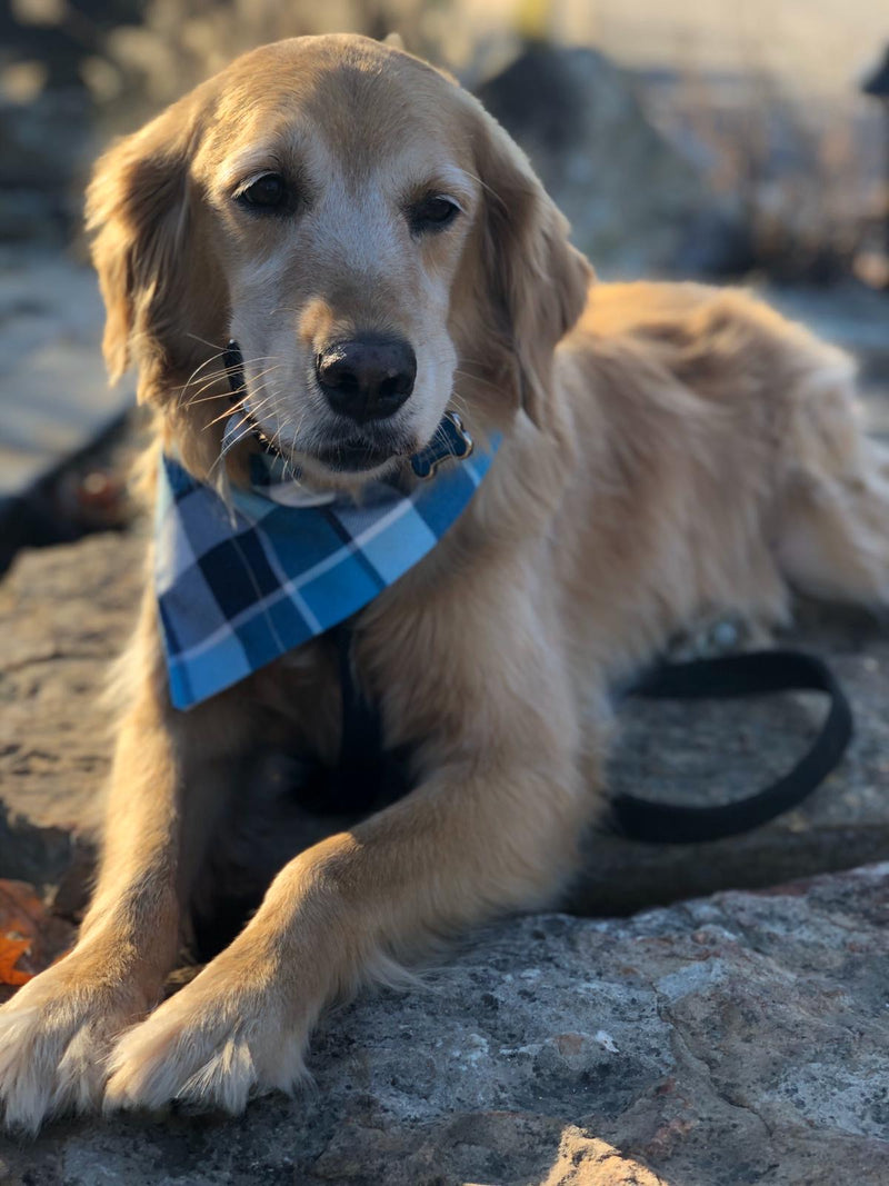 Turtle Blue Plaid Flannel Bandana