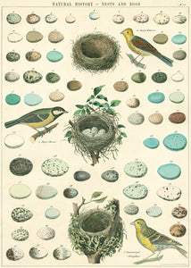 Birds, Nest & Eggs Poster