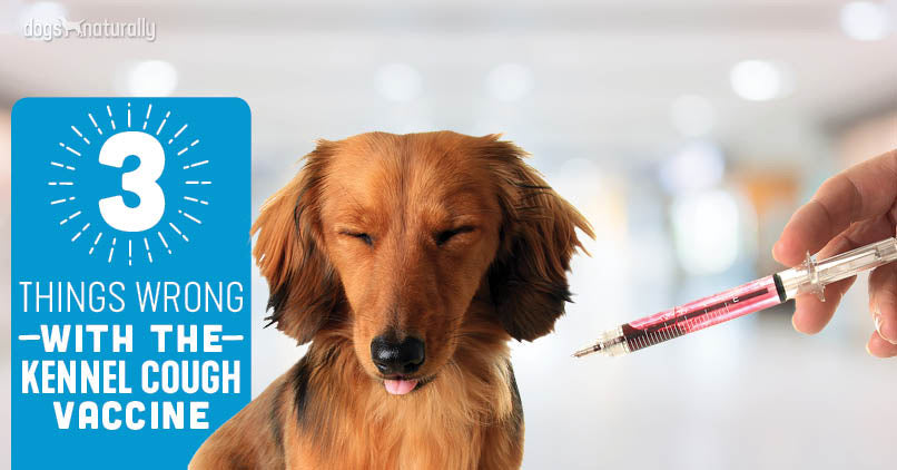 Kennel Cough Vaccination - a maverick view