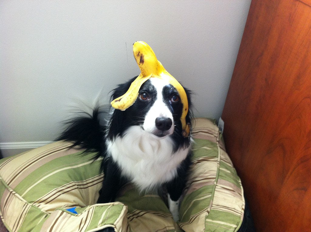 Can dogs eat Banana's ??