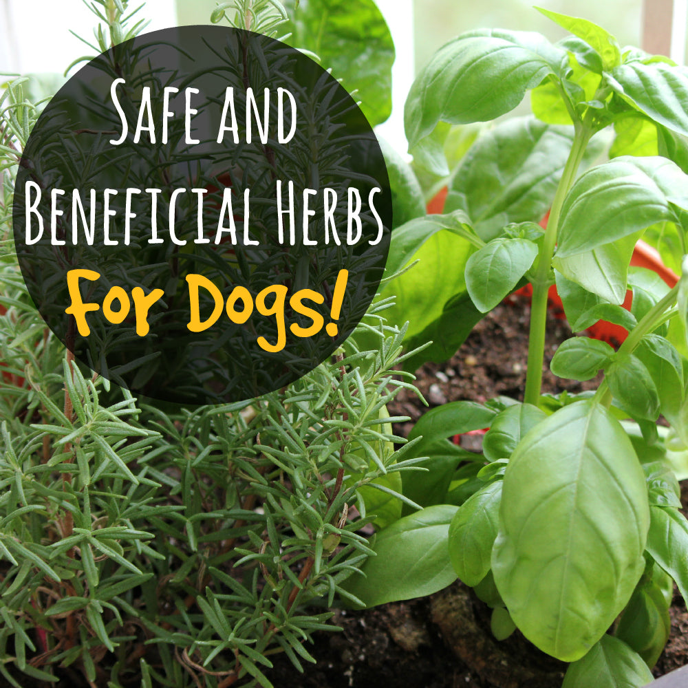 Herbal First Aid for Dogs