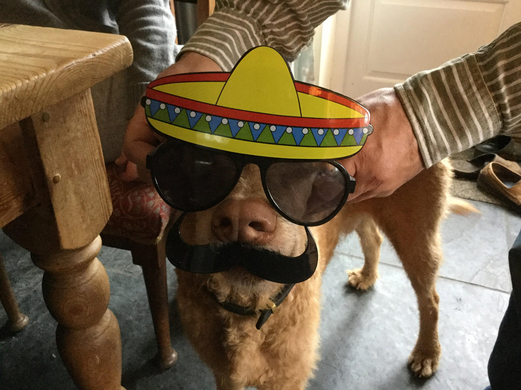 doghealth and the mexican hat