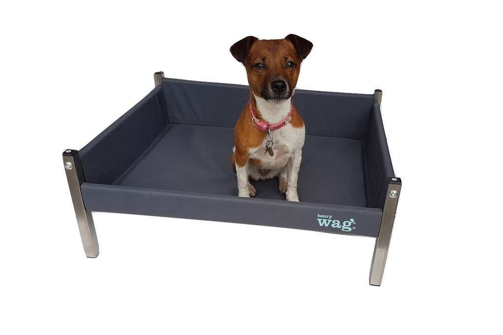 Henry Wag raised bed